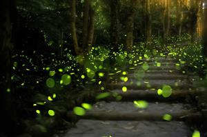green fireflies