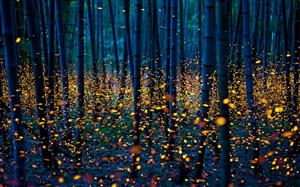 orange fireflies