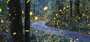 yellow fireflies